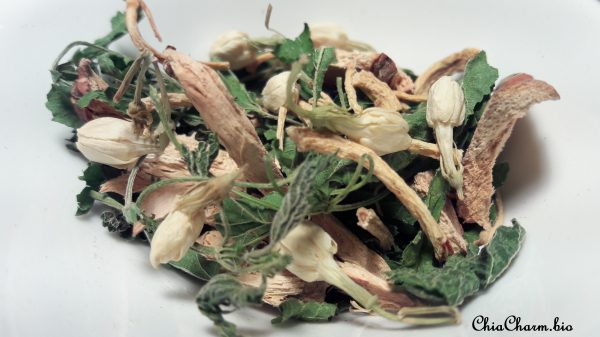 Nettle Galangal signed